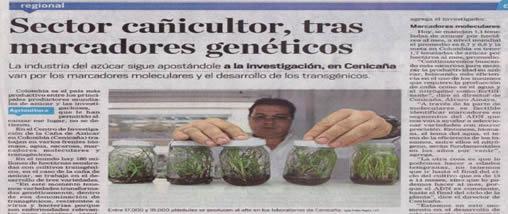 Sector cañicultor, tras marcadores genéticos
